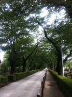 Aobochi1