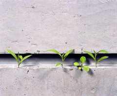 梅雨の湿気のせいか野の草が生えてきた〜ギャラリー小柳、須田悦弘
