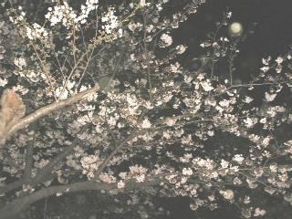 Sakurakama